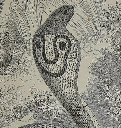 1870 the hooded serpent illustration