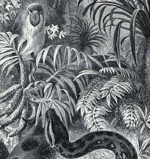 Anaconda Slithery Snake 1909 Vintage German Engraving Original Antique Print