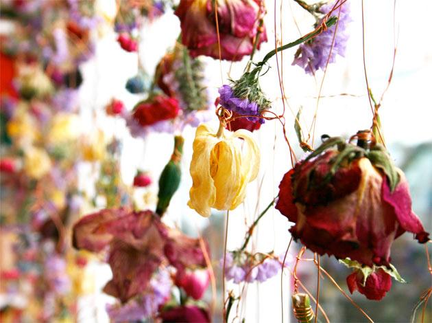 flowerlover-14